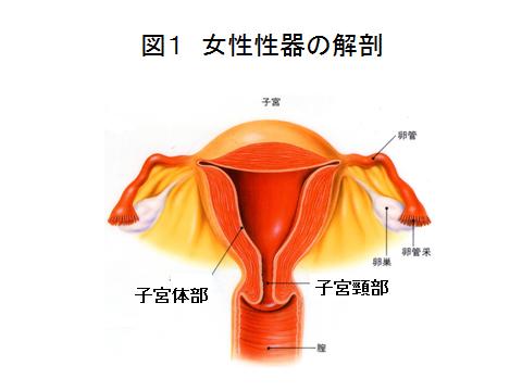 増殖 膜 症 内 子宮